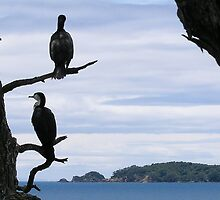 Perched On Whangaparaoa by davidandmandy