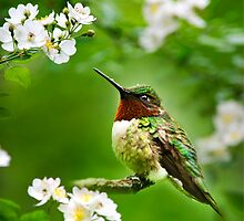Fauna and Flora Hummingbird with Flowers by Christina Rollo