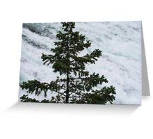A Lone Pine Greeting Card