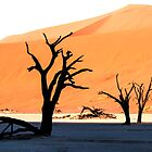 Deadvlei Shadows by Marylou Badeaux