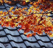 Autumn Leaves And Rooftop by davidandmandy