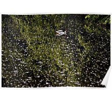 Wetlands - Martin Mere -  A View Poster