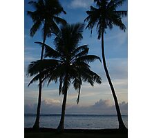 Three Beach Palms Photographic Print
