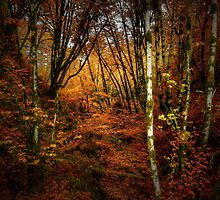 Fall Delight ~ Red Alder Trees ~ by Charles & Patricia   Harkins ~ Picture Oregon