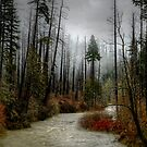 Winters Love ~ Upper Fall Creek ~ by Charles & Patricia   Harkins ~ Picture Oregon