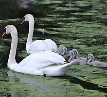 Happy Family by Gilda Axelrod