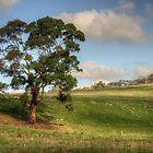 Anakie Tree by Danielle  Miner