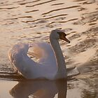 White Swan -  Backlit by James  Key