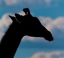 Giraffe in Silhouette by Marylou Badeaux