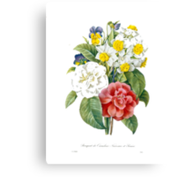 P.J. Redoute vintage colorful flowers botanical illustration.  pink and white camellia, yellow and white daffodils, blue and yellow pansies. Canvas Print