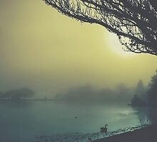 Fog on the Lake by Mitchell Harris