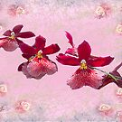 Red  Orchids by Irene  Burdell