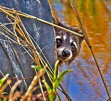 2014 May Raccoon in Drain Tube by Rick  Grisolano Photography LLC