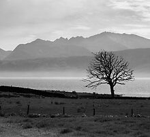 Isle Of Bute - The One Tree by Kevin Skinner
