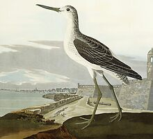 Greenshank, View of the St by Bridgeman Art Library