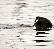Otter Lunch by Leah Highland