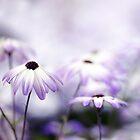 Purple Bokeh by Rebecca Cozart