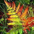Leaf it Behind. by wazrom