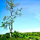 Solitary Tree by Bluejayarts