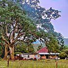 Gumtree Gully by wallarooimages