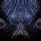 Native Star Trails Timelapse Night Sky Pattern over Forest by Gavin Heffernan