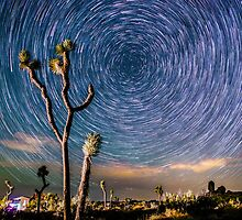 Polaris Star Trails Spin Around Yucca in Joshua Tree by Gavin Heffernan