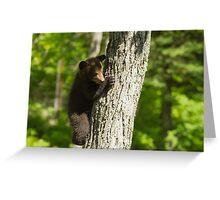 A Black Bear cub in a tree Greeting Card
