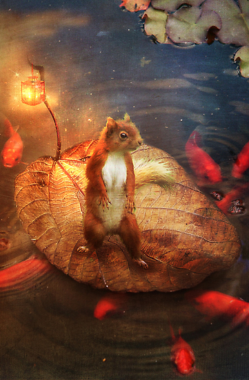 Columbus the Squirrel by Aimee Stewart