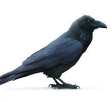 raven by v0ff