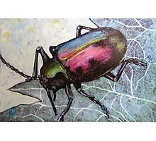 Dung Beetle Beauty Photographic Print