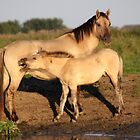 Konik Horse with Foal by Jo Nijenhuis
