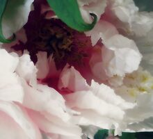 Peony by Honora