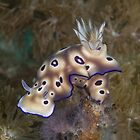 Leopard Nudibranch by Mark Rosenstein