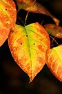 Colors of Fall   by Jens Helmstedt