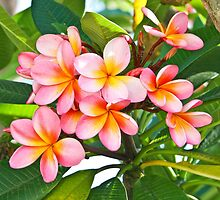 Pink Plumeria Tree by Angelina Hills