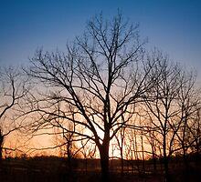 Winter Trees at Dusk by David Lamb