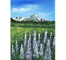 Lupin and Mountain Photographic Print