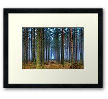 Pine Forest in Morning Fog. Framed Print