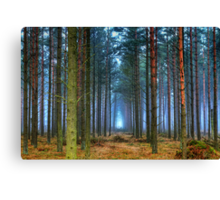 Pine Forest in Morning Fog. Canvas Print