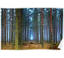 Pine Forest in Morning Fog. Poster
