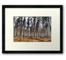 Pine Trees in Morning Fog. Framed Print