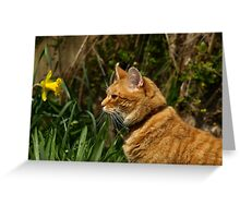 Ginger cat in garden with daffodil Greeting Card
