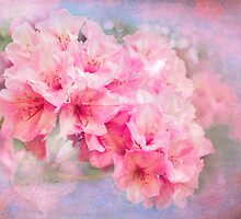 Tangled up in Pink by Amar-Images