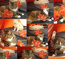 Hibiscus Cats In Orange Tent by Dianne Connolly