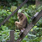 Monkey by Georgia Laughton