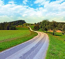 Apple trees along the country road | landscape photography by Patrick Jobst