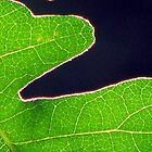 Leaf Yin / Yang by Chris Gudger