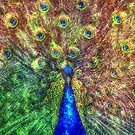 peacock by Ancello