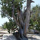 Twisted Tree by bradleyduncan
