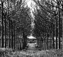 Trees by Motti Golan